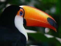 In Costa Rica, l'ecoturismo contribuisce per ben il 16% all'economia nazionale. In Italia il valore del turismo nelle nostre aree protette  di quanto è?
