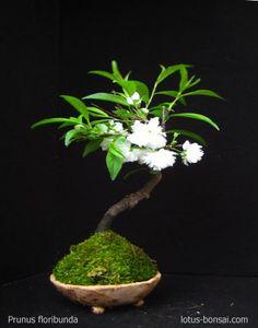 Kokedama & Penjing compositions