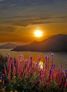 wildflowers by sunset