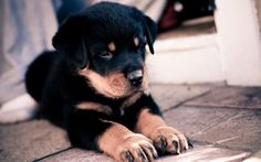 I love dogs! :)