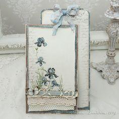 Iris sibirica - Pion Designs blog