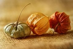 Beautiful earth tones. From Mandy Disher on RedBubble