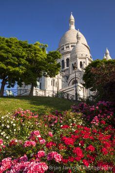 ღღ Roses below Basilique du Sacre Coeur, Montmartre, Paris France. © Brian Jannsen Photography