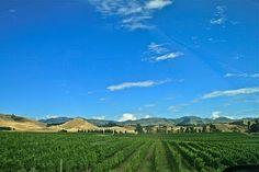 Marlborough (wine country)