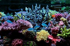 Reefkeeping Magazine - Tank of the Month