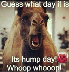 1000+ images about Wednesday good morning on Pinterest | Wednesday, Happy wednesday and Hump day