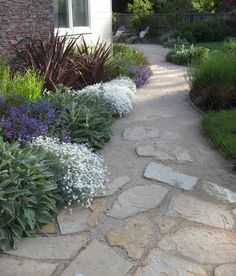 DG and flagstone combo and planting