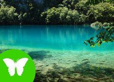 Actividad 2. Vídeo explicativo sobre qué son los ecosistemas, sus componentes y clases de ecosistemas. (Recurso 2)