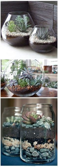 succulent plant decor idea 13