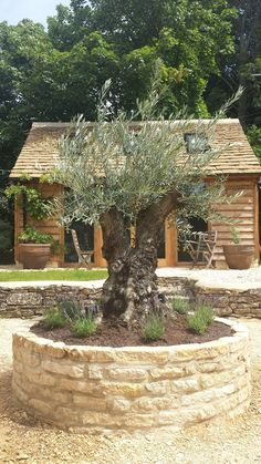 Olive Tree feature in Small Garden Olive Tree, Small Gardens, Fountain, Garden Design, Outdoor Decor, Plants, Lawn And Garden, Little Gardens, Water Fountains