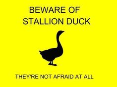 I need a stallion duck t-shirt like I need air in my lungs. Props to anyone who knows what this is from.