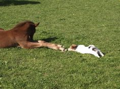 """Winning Caption: """"I'm not touching you, I'm not touching you…"""" - Char - courtesy of our friends at Hahahorses.com."""