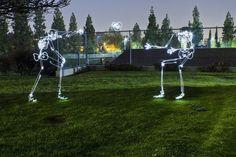 Afterlife: Skeletons of Light - Neatorama
