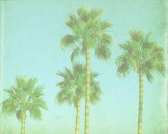 VIntage Palm Tree Beach Print - Blue Green Retro Tropical Ocean Beach…