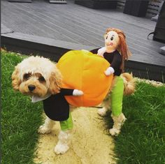2019 Hot Pet Dog Pumpkin Halloween Costume oncetwo 2019 Hot Pet Dog Pumpkin Halloween Costume oncetwo The post 2019 Hot Pet Dog Pumpkin Halloween Costume oncetwo appeared first on Halloween Costumes. Pumpkin Halloween Costume, Dog Halloween Costumes, Pet Costumes, Halloween Pumpkins, Halloween Christmas, Halloween Desserts, Halloween Cupcakes, Halloween Treats, Funny Animal Videos