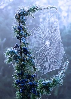 This always leaves me breathless!  the-absolute-best-photography:  The woven web…spirals upon spirals…  You have to follow this blog, it's really awesome!