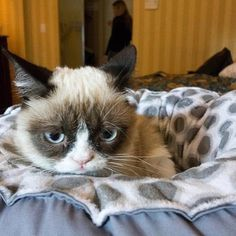 Cute little grumpy cat without meme For once