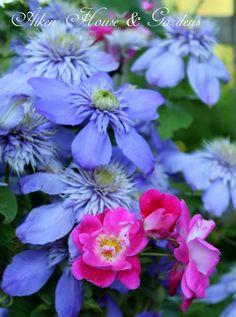 Aiken House & Gardens: The Summer Garden