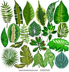 Find tropical leaves stock images in HD and millions of other royalty-free stock photos, illustrations and vectors in the Shutterstock collection. Thousands of new, high-quality pictures added every day. Tropical Art, Tropical Leaves, Tropical Plants, Leaf Drawing, Plant Drawing, Plant Illustration, Botanical Illustration, Trees To Plant, Watercolor Paintings