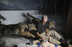 Museum Dioramas Are as Endangered as the Animals They Contain