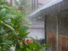 12/3(土)バリ島ウブドのお天気は雨。室内温度26.7℃、湿度85%。12時すぎると雨が降る日が続いていいます。長雨になりそうかしらー?外出もできず、おこもりな午後になりそうです