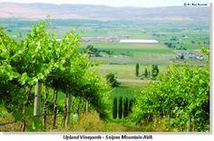 Upland Vineyards | Snipes Mountain AVA