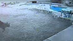 Video Footage Shows Bobcat Killing Dog In Backyard Predator Hunting, Coyote Hunting, Archery Hunting, Trophy Hunting, Whitetail Deer Hunting, Pheasant Hunting, Saltwater Fishing, Kayak Fishing, Bowfishing