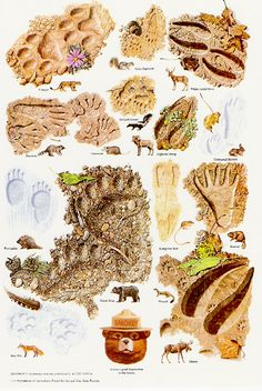 A Collection Of Smokey Bear's Best Nature Posters: Smokey's Tracks