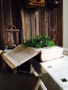 Plantation in a book (Facebook)