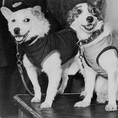 Belka and Strelka were plucked as strays from the streets of Russia and were trained up as space dogs. They became the first creatures to enter Earth orbit and safely return. Once their mission was completed they became celebrities and their work paved the way for future space missions.  In this weeks Science Focus Podcast we talk to space expert Vix Southgate. She was so inspired by the story of Belka and Strelka that shes written a book for children Dogs In Space (12.99 Wren & Rook) to…
