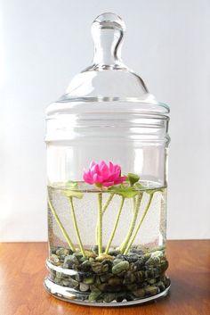 bocal en verre à couvercle et sa plante aquatique fleurie