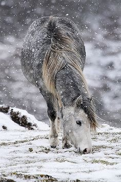 Wild Pony  Taken on The Long Mynd during a blizzard! by Jean Macdonald