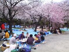 One day I will see the cherry blossoms in Japan.
