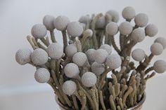 silver brunia - Google Search