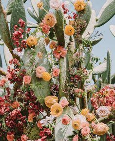 Flower Aesthetic, Aesthetic Images, Aesthetic Wallpapers, Cactus Flower, Flower Art, Plant Design, Garden Design, Amazing Flowers, Beautiful Flowers
