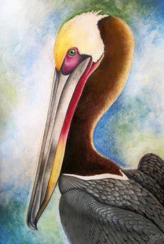 Original watercolor pelican painting- fine art print- 8 x 10, 11 x 14, 11 x 17 & 12 x 18- Bird watercolor painting giclee- FREE SHIPPING. Via Etsy.