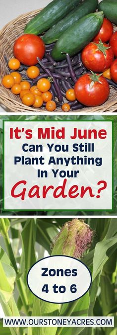 June Planting Guide - It's not too late to Plant! - Our Stoney Acres | 1004
