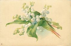 white lilies-of-the-valley, stems to right