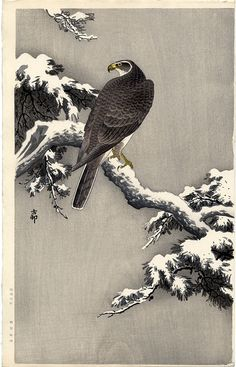 aleyma:    Ohara Koson, Goshawk on a Snow Covered Pine Branch, c.1920s (source).