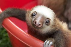 """""""I dare YOU to get in a bucket and still be sad!"""" 