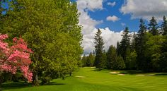 Golf at Sahalee - I'm really not that good, but the course is so pretty...