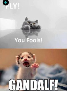 LOTR kitties