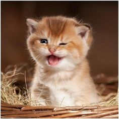 25 best cats winking cat images