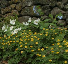 Springtime Wildlife Gardens