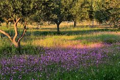 """M   o    m    e    n    t    s    b    o    o    k    .    c    o    m: """"Πάνω σ' ένα ζουμπούλι ξεψύχησε η Άνοιξη"""" (Αλκυόνη... Vineyard, Country Roads, Nature, Outdoor, Outdoors, Naturaleza, Vine Yard, Vineyard Vines, Outdoor Games"""