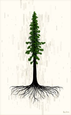 Another idea for the redwood - showing the root system. Love this one, add the heart in the root system, PERFECT!!!