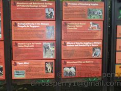 Monkey Habitat, Singapore Vacation, Behavioural Ecology, Vacation Trips, Habitats, Elephant, Island, Education, Elephants
