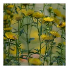 August Flowers Poster from Zazzle.com