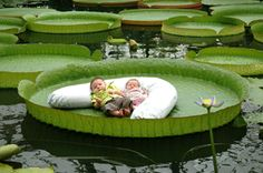 National Botanical Garden, Meise. A professional photographer taking pictures of your kids on a giant leaf.