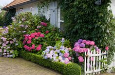 Cottage Garden | Monrovia:  Oh my god, I absolutely LOVE the deep pink and the other pink...